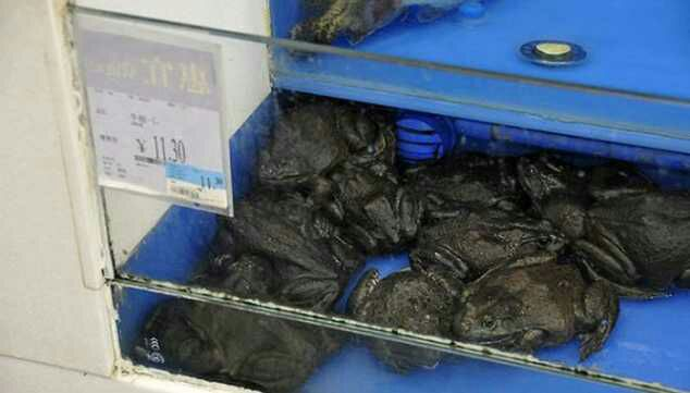 24 Crazy Things You'll Only Find In Chinese Walmarts
