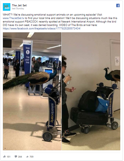 This Woman Tried To Bring a Emotional Support Peacock On a Plane
