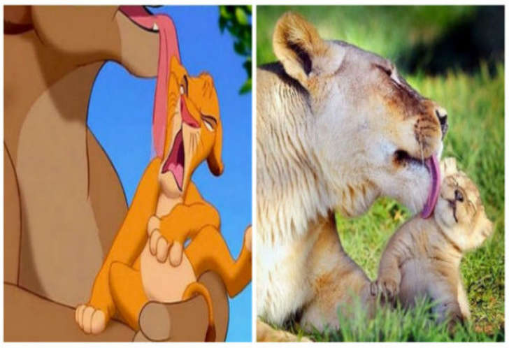 Proof Lion King True Story