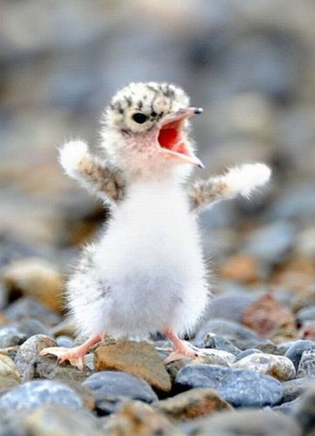 Adorable Angry Animals Cute