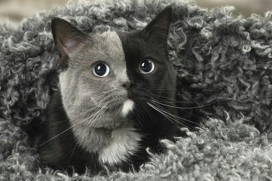 Kitten Was Born With Two Faces But Grows Up Into The Most Beautiful Cat Ever